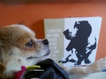 Addie at the vet- her profile is funny huh?  LOL!  I LOVE the painting behind her-great message!