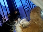 "Then, ""danger"" must've been sensed by the doggies, so the barking at the window ensured"